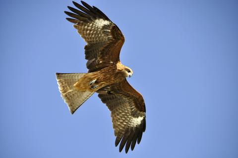 鳥の目で日本を取り戻す